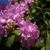 Oneonta Flower 1