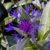 Oneonta Flower 2