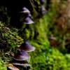 Floating Mushrooms