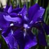 Oneonta Flower 3