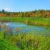 Ausable Marsh
