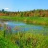 Ausable Marsh