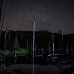 Dead Wood Beaver Dam Mt Van Hoevenberg